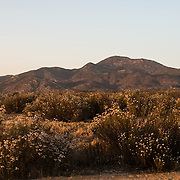 The low mountains on the skyline at Temecula, Calfornia, near Skinner Lake, in the late afternoon sunlight.