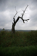 dead tree against a dark gray sky