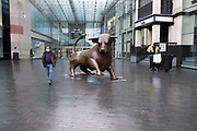National coronavirus lockdown three begins at the Bull Ring Shopping Centre in Birmingham city centre, which is deserted apart from a few people wearing face masks passing the Bully sculpture on 6th January 2021 in Birmingham, United Kingdom. Following the recent surge in cases including the new variant of Covid-19, this nationwide lockdown, which is an effective Tier Five, came into operation today, with all citizens to follow the message to stay at home, protect the NHS and save lives.