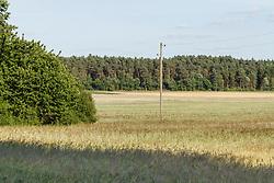 Göhrde, Govelin, Niedersachsen, Wendland, Deutschland