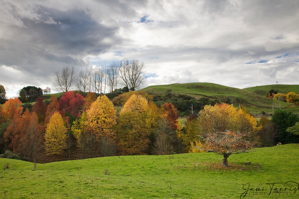 Autumn leaves and fall colors enhance the already beautiful countryside, North Island, New Zealand