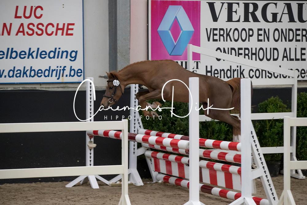 02 - Rafaello Ter Rozendaele<br /> BrP Keuring <br /> Hulsterlo - Meerdonk 2017<br /> © Dirk Caremans<br /> 17/03/17