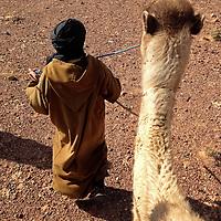 Africa, Morocco, Skoura. Rider Point of View on Camel Trek.