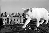 dog/cat Shakti