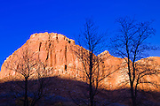 Bare trees against evening light on the Waterpocket Fold, Capitol Reef National Park, Utah