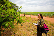 Sao Jose do Rio Preto_SP, Brasil...Pesquisadora analisando uma planta...Researcher examining a plant.. .FOTO: JOAO MARCOS ROSA /  NITRO