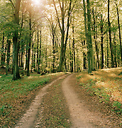A dirt road winding through forest near to Granitz, Germany