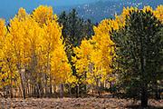 Photographs of Autumn Colours CO