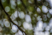 abstract out of focus photograph of foliage and leaves in a forest