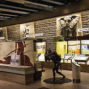 Exhibits on human evolution at the Smithsonian National Museum of Natural History on the National Mall in Washington DC.
