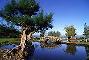 Lilioukulani Park, Hilo, Ialsnd of Hawaii<br />