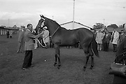 24/09/1963<br /> 09/24/1963<br /> 24 September 1963<br /> Goffs September Bloodstock Sales at the RDS, Dublin. Picture shows Lot 275 at the stables.