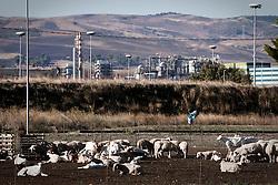 San Nicola di Melfi (PZ) 2011 - Isola Fenice. La lotta della popolazione lucana contro il termovalorizzatore Fenice. Nella Foto: il paesaggio agricolo nell'area di San Nicola di Melfi con lo sfondo di Fenice.