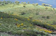 Land abandonment.Vegas de Domingo Rey village.Salamanca Region, Castilla y León, Spain