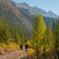 Hikers walk by fall colored aspens in Banff National Park, Alberta, Canada.