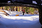 Backcountry skier at the Tunnel Log, Giant Forest, Sequoia National Park, California