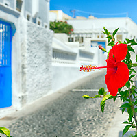 Red hibiscus flower with a backdrop of a blue door and whitewashed buildings. Megalochori, Santorini, Greece.