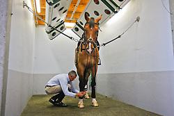 Hendrickx Dominique (BEL)<br /> Starhorses - Morkhoven 2008<br /> Photo © Hippo Foto