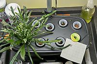 AeroGarden Bounty 02 (Right) at 28 days. 01 Crimson Clover, ; 02 California Poppy; 03 Oriental Poppy; 04 Red Poppy Mix; 05 Red Poppy; 06 Blue Cornflower; 07 Purple Cornflower; 08 Lemon Mint; 09 Lupine. Image taken with a Leica TL-2 camera and 35 mm f/1.4 lens (ISO 800, 35 mm, f/8, 1/100 sec).