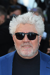 Ash Is The Purest White Red Carpet Arrivals at The 71st Annual Cannes. 11 May 2018 Pictured: Pedro Almodóvar. Photo credit: MEGA TheMegaAgency.com +1 888 505 6342
