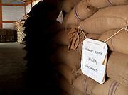 Organic coffeee beans stored at coffee plantation, Malabar, Mangalore, Kerala, India.