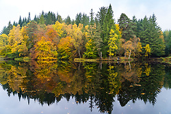 Pitlochry, Scotland, UK. 20 October 2020. Autumn colours at Loch Dunmore in Faskally Wood near Pitlochry in Perthshire. Iain Masterton/Alamy Live News