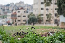 25 February 2020, Jerusalem: Empty plot in Beit Hanina.