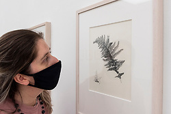© Licensed to London News Pictures. 17/09/2021. LONDON, UK. A staff member views graphite illustrations of Dryopteris affinis by Guy William Eves.  Preview of the RHS Botanical Art & Photography Show 2021 at the Saatchi Gallery.  More than 200 pieces featuring an array of scientifically accurate botanical illustrations by 15 artists and portfolios from 19 photographers are on show September 18 to October 3, 2021 in an event that runs parallel to the RHS Chelsea Flower Show, hosted for the first time in Autumn.  Photo credit: Stephen Chung/LNP