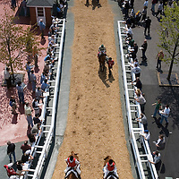 (PPAGE1) Oceanport 5/14/2005  Race roses leave the paddock and enter onto the track for the 4th race of opening day at Monmouth Park. .   Michael J. Treola Staff Photographer....MJT
