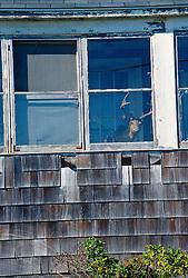 Stuffed deer head looking out a window of a broken down home