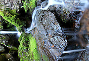 A hidden stream falls over rock and moss in this secret waterfall near Paradise Park, Rocky Mountain National Park, Colorado.