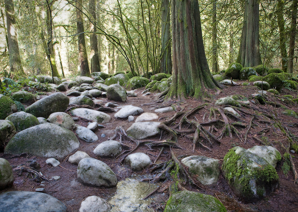 Roots and rocks on the forest floor, British Columbia, Canada
