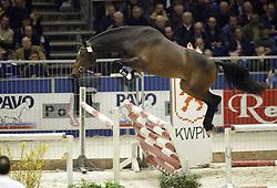 45 Thierry<br />KWPN hengstenkeuring 2003<br />Photo © Dirk Caremans