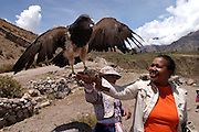 Chivay - Tuesday, Dec 17 2002: Lorna Brooks handles a large bird of prey at a tourist stop-off in the Colca Valley.  (Photo by Peter Horrell / http://www.peterhorrell.com)