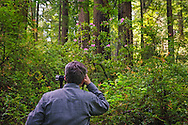 Photographer taking pictures in the forest, Redwood National and State Parks, Del Norte County, California