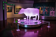 Model of a cow in the Fort Worth Museum of Science and History in Texas.