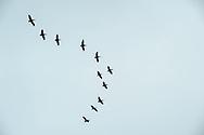 Pelican, , Half Moon Bay, California