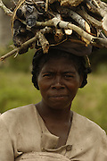 Antandroy woman collecting firewood. The braided and knotted hairstyle is typical of these people. Their traditional houses are made from the Endemic Didiereacaea plants. These 'people of thorns' live in the 'spiny' forests of Southern Madagascar and are mainly cattle herders - their ancestors coming from mainland Africa.<br />THREATENED HABITAT<br />MADAGASCAR