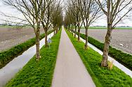 Nederland, Beemster, 20190405<br /> Polder De Beemster, beroemd om z'n strakke en letterlijk rechtlijnige landinrichting. Daarom staat deze polder ook op de Unesco lijst voor Wereld Erfgoed.  In de achtergrond de heel anders ingerichte polder de Schermer.<br /> <br /> Foto: (c)Michiel Wijnbergh