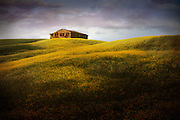A farmhouse sits on top of rolling Tuscan hills covered in yellow flowers in Italy