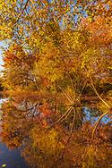 Quogue Wildlife Refuge Fall, Quogue, NY
