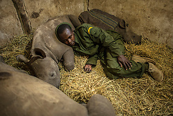 Yusuf, a keeper at the Lewa Wildlife Conservancy in Kenya sleeps among three baby rhinos. The calf he rested his head on was orphaned when poachers killed his mother 50 miles away. Much needed attention has been focused on the plight of wildlife and the conflict between heavily armed poachers and increasingly militarized wildlife rangers. But very little has been said about the indigenous communities on the front lines of the poaching wars and the incredible work they do to protect these animals. They hold the key to saving Africa's great animals.