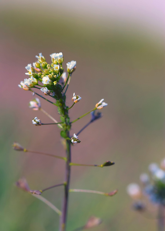 A macro shot of a tiny wildflower with the freshness of incoming spring