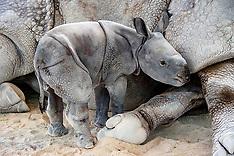 Adorable baby rhino makes history - 25 April 2019