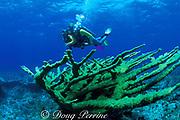 divers and elkhorn coral, Acropora palmata<br /> ( threatened species ), Hogsty Reef, Bahamas,<br /> ( Western Atlantic Ocean )  MR 161, MR163