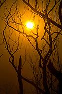 Australia   Black Saturday Bushfires
