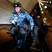 A anti-terrorism police helps his bomb-sniffer dog step off the escalator at a Moscow metro station on the ring line. .The Moscow Metro, which spans almost the entire Russian capital, is the world's second most heavily used metro system after the Tokyo's twin subway. Opened in 1935, it is well known for the ornate design of many of its stations, which contain outstanding examples of socialist realist art.