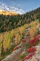 Pacific Crest Trail near Cutthroat Pass. North Cascades Washington