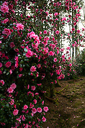 Windy Hall Garden