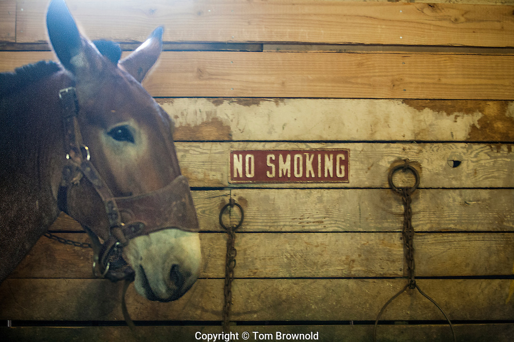 Barn rules or Brighty says no smoking